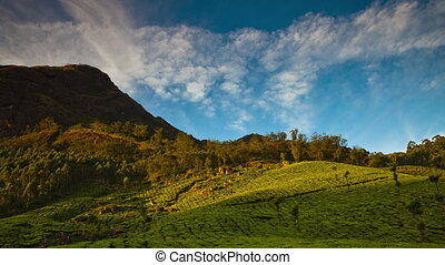 Timelapse scenery of plantations under the mountain. Andreev.