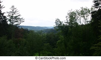 Pan view of summer landscape. Coniferous trees
