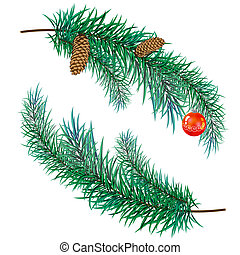 pine branch with cones - The pine branch with cones and toy