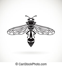 Vector of a wasp on a white background. Insect Animal
