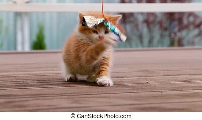 Cute ginger kitten playing joyfully with a toy in slow...