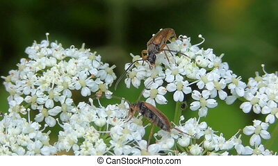 Macro insects in their natural habitat - Insects under...