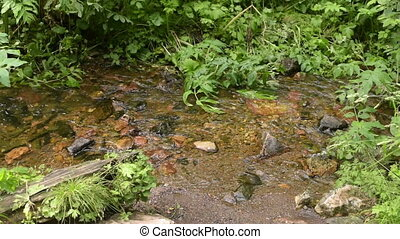 Brook in a summer Siberian forest - Running brook in a...