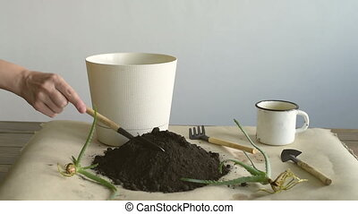 Filling a pot with dirt - Female hand filling a pot with...