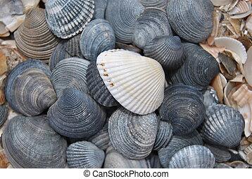 conchas, 2