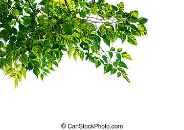 gr - Green leaves frame isolated on white background. Copy...