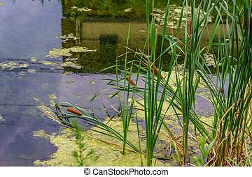 Delaware Canal Towpath and bulrush, Historic New Hope, PA...