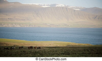 Beautiful view of the herd of horses grazing on the field,...