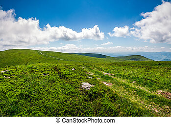 path through hillside in high mountains - summer landscape....