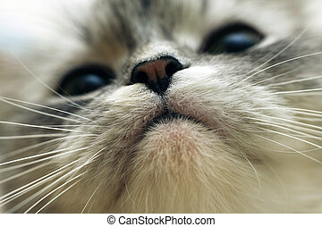 Nose - Close-up of a nose of a cat