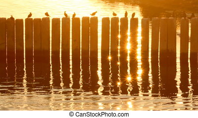 Birds in the port at sunset