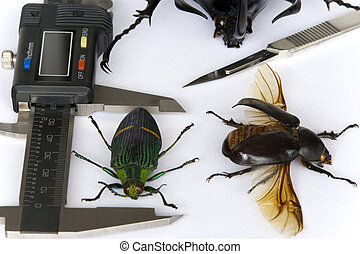 Entomology - Image of a typical entomologist's work table.