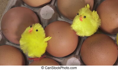 toy chickens sit between eggs,