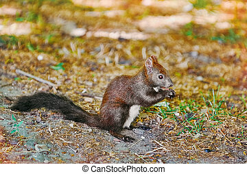 Squirrel on the Ground - Squirrel Sitting on the Ground and...