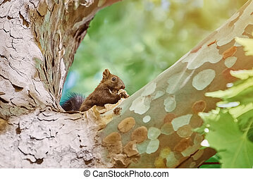 Squirrel on Tree - Squirrel Eats on the Trunk of an Old...