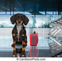 dog in airport terminal on vacation - holiday vacation...