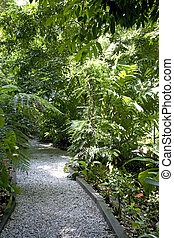 Tropical Spice Garden - Walkway and greenery of a tropical...