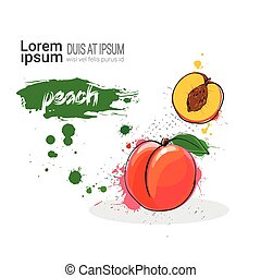 Peach Hand Drawn Watercolor Fruit On White Background With...