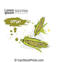 Corn Hand Drawn Watercolor Vegetable On White Background...