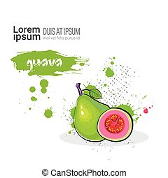 Guava Hand Drawn Watercolor Fruit On White Background With...