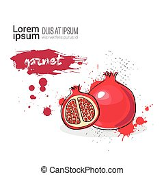 Garnet Hand Drawn Watercolor Fruit On White Background With...
