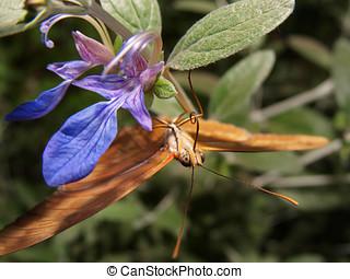 Julia Upside down - An orange butterfly known as a Julia...