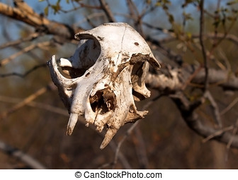 Keep Out - An animal skull mounted on a tree branch marking...