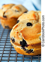 Blueberry Muffins - Fresh baked blueberry muffins, on a...