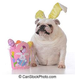 被給穿衣, 復活節, 狗, 向上