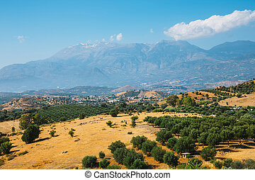 Beautiful mountain landscape with olive plantation, Crete...