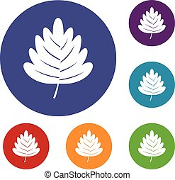 Hawthorn leaf icons set in flat circle red, blue and green...