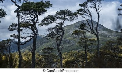 Time Lapse At Glen Affric, Scotland - Zoom Out