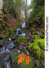 Small Waterfall at Lower Lewis River Falls - Tributary...