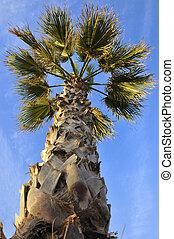 palmtree - a palmtree on the beach of Valencia, spain