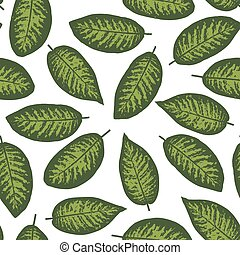 Dieffenbachia tropical leaf seamless pattern. Vector...