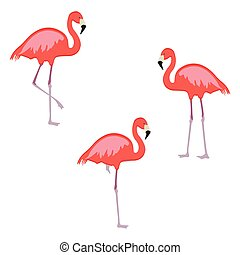 Pink flamingo vector - Vector illustration set, collection...