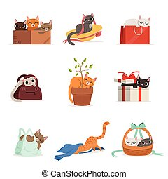 Cute differents cats having rest in their favorite places set of vector Illustrations