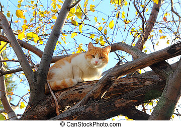 cat on autumn tree - cat looking to you sitting on autumn...