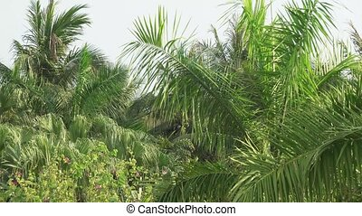 Lush tropical garden with tops of palm trees swaying in wind stock footage video