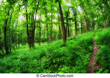 Forest path in greenwood - Forest path and green trees in...