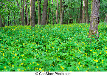 Green deciduous forest - Beautiful spring deciduous trees in...