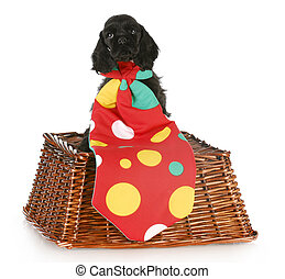 puppy clown - cocker spaniel puppy wearing big polka dot...