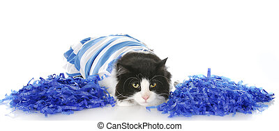 cheerful cat - cat dressed up as cheerleader with blue...
