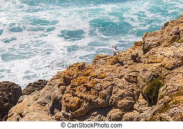 Seagull in Porto Covo beach, Alentejo, Portugal
