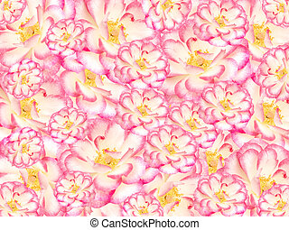 floral flower  background, pink white and yellow