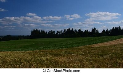 Pan view of European landscape in the summer time. Wheat...