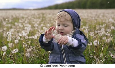 Cute little boy sitting on the ground holding dandelion. -...