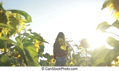 Happy elegant woman running in sunflower field - Back view...