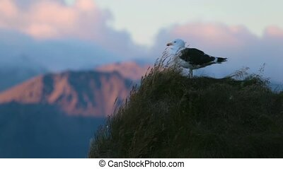 A sea gull stands on a rock cliff. Andreev.