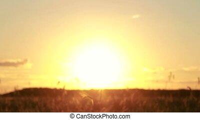 Female hands holding flower wreath in sunset light -...